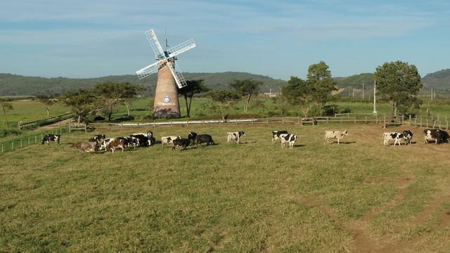 Khám phá trang trại Vinamilk Organic chuẩn châu Âu trên cao nguyên Đà Lạt - Ảnh 14.