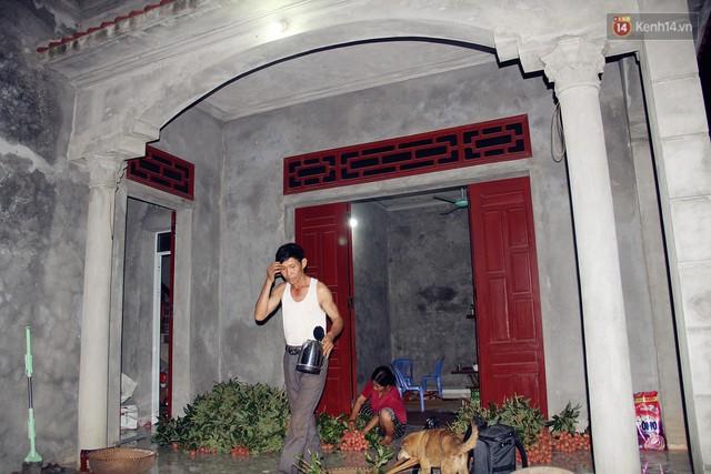 Người dân Bắc Giang dậy từ 3 giờ sáng để bẻ vải, thức xuyên đêm vặt lá cho kịp thời vụ - Ảnh 1.