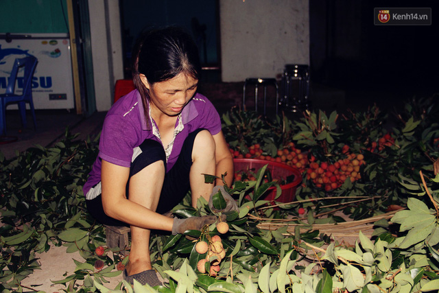 Người dân Bắc Giang dậy từ 3 giờ sáng để bẻ vải, thức xuyên đêm vặt lá cho kịp thời vụ - Ảnh 5.