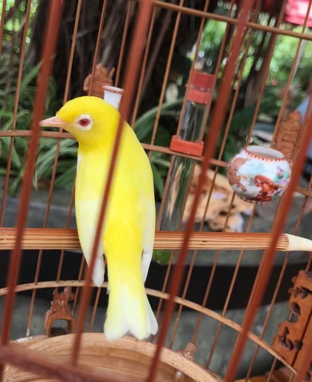 Gặp ông trùm thời trang với bộ sưu tập chim khủng 10 tỷ đồng: Chim nằm điều hòa, có camera an ninh và hai nhân viên chăm sóc đặc biệt - Ảnh 7.