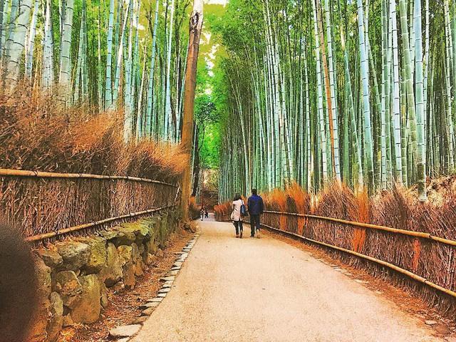 Lạc lối giữa mê cung xanh mướt của rừng tre Sagano: Nơi chứa đựng những âm thanh tinh túy cả Nhật Bản đều muốn bảo tồn - Ảnh 7.