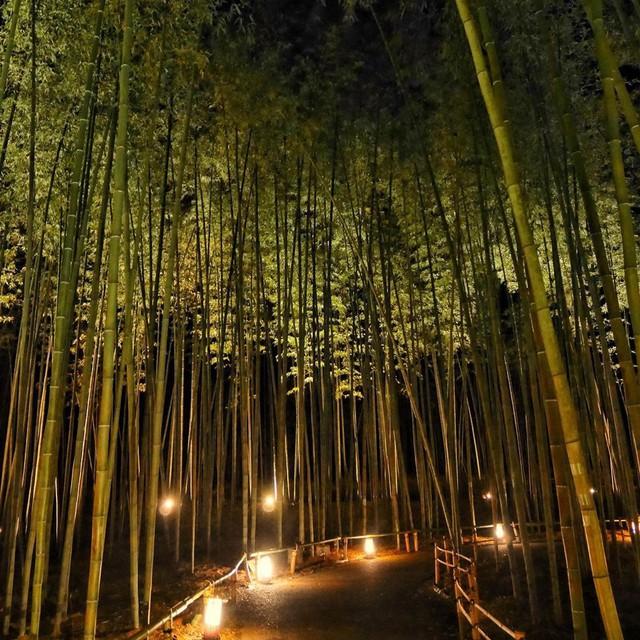 Lạc lối giữa mê cung xanh mướt của rừng tre Sagano: Nơi chứa đựng những âm thanh tinh túy cả Nhật Bản đều muốn bảo tồn - Ảnh 16.