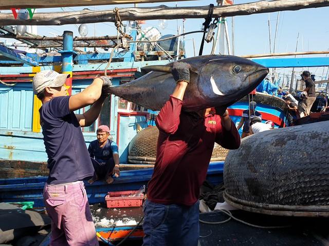 Cấp hạn ngạch để đảm bảo đánh bắt cá ngừ đại dương bền vững - Ảnh 1.