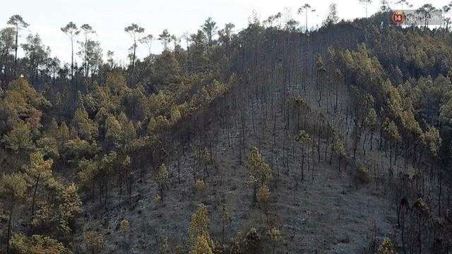 Clip nhìn từ trên cao: Cánh rừng thông xám xịt ở Hà Tĩnh sau 4 ngày lửa bùng cháy kinh hoàng khiến nhiều người xót xa - Ảnh 2.