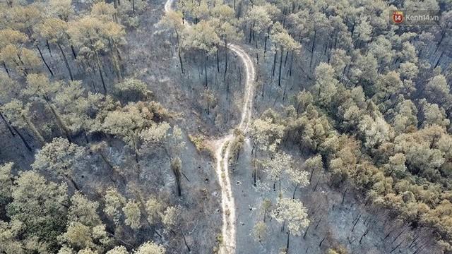 Clip nhìn từ trên cao: Cánh rừng thông xám xịt ở Hà Tĩnh sau 4 ngày lửa bùng cháy kinh hoàng khiến nhiều người xót xa - Ảnh 5.