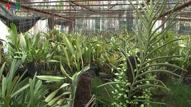 Trồng hoa lan trên 100m2 đất nông nghiệp cho thu nhập trăm triệu/năm - Ảnh 2.