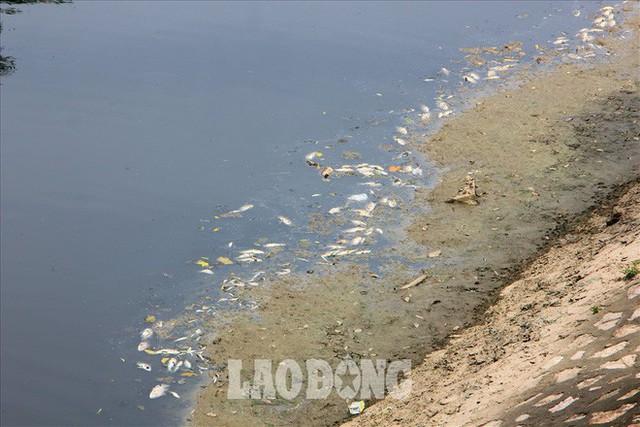 Nước sông Tô Lịch đen trở lại, xuất hiện cá chết trắng nổi lềnh bềnh - Ảnh 4.