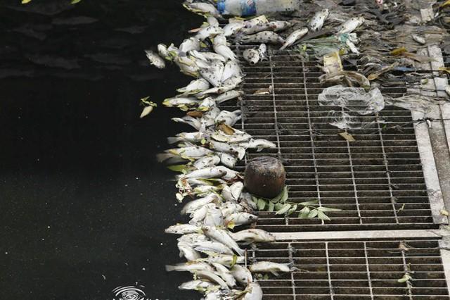 Cá chết nổi trắng một đoạn sông Tô Lịch do va đập? - Ảnh 2.