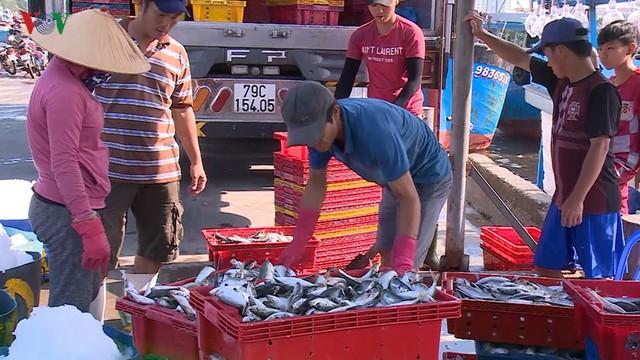 Ngư dân miền Trung trúng đậm mùa cá nục biển - Ảnh 2.