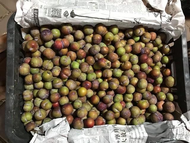 Lừa bán đặc sản Sa Pa, dân Việt ăn hết 3.000 tấn mận Tàu - Ảnh 1.