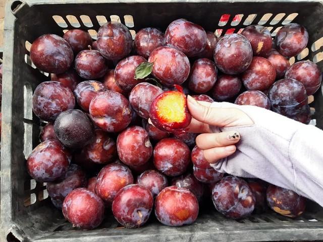 Lừa bán đặc sản Sa Pa, dân Việt ăn hết 3.000 tấn mận Tàu - Ảnh 3.