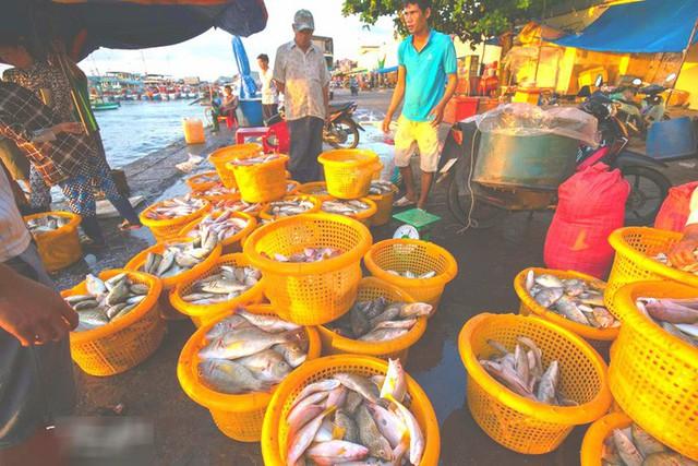 Mãn nhãn tại cảng cá lâu đời ở đảo ngọc Phú Quốc - Ảnh 8.