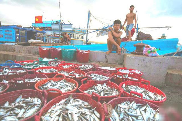 Mãn nhãn tại cảng cá lâu đời ở đảo ngọc Phú Quốc - Ảnh 10.