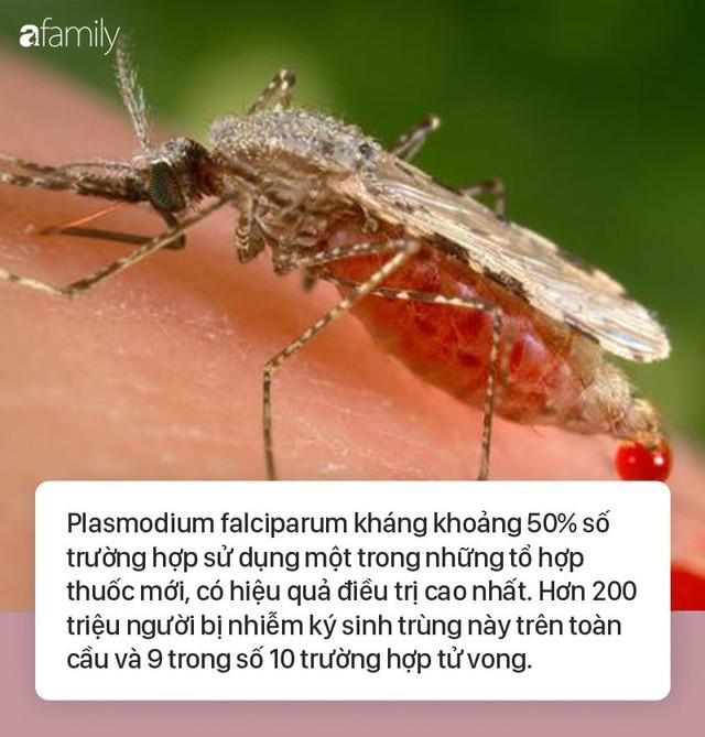 Ký sinh trùng sốt rét kháng thuốc lây lan nhanh khắp Đông Nam Á, chuyên gia cảnh báo chủ động phòng bệnh - Ảnh 1.