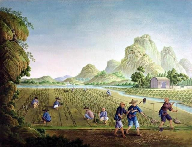 Dành nửa đời người trồng dưa thần, 2 anh em nhận về kết quả chẳng ai giống ai: Người biết đặt nền móng thành công nhất định sẽ có phẩm chất này! - Ảnh 2.