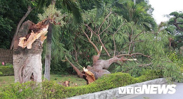 Ảnh: Bão số 2 quần thảo Đồ Sơn, quật đổ hàng loạt cây xanh ở Hải Phòng - Ảnh 2.