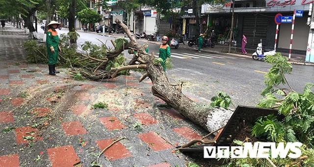 Ảnh: Bão số 2 quần thảo Đồ Sơn, quật đổ hàng loạt cây xanh ở Hải Phòng - Ảnh 14.