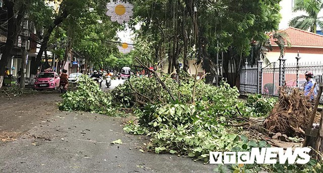 Ảnh: Bão số 2 quần thảo Đồ Sơn, quật đổ hàng loạt cây xanh ở Hải Phòng - Ảnh 15.