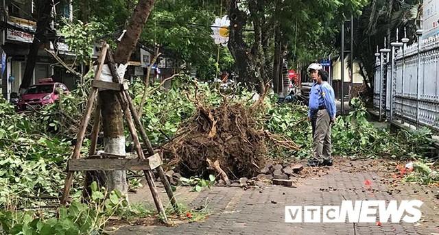 Ảnh: Bão số 2 quần thảo Đồ Sơn, quật đổ hàng loạt cây xanh ở Hải Phòng - Ảnh 16.