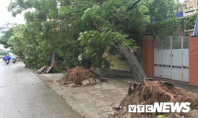 Ảnh: Bão số 2 quần thảo Đồ Sơn, quật đổ hàng loạt cây xanh ở Hải Phòng - Ảnh 17.