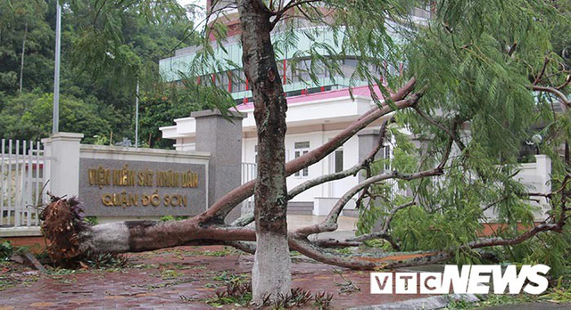 Ảnh: Bão số 2 quần thảo Đồ Sơn, quật đổ hàng loạt cây xanh ở Hải Phòng - Ảnh 3.