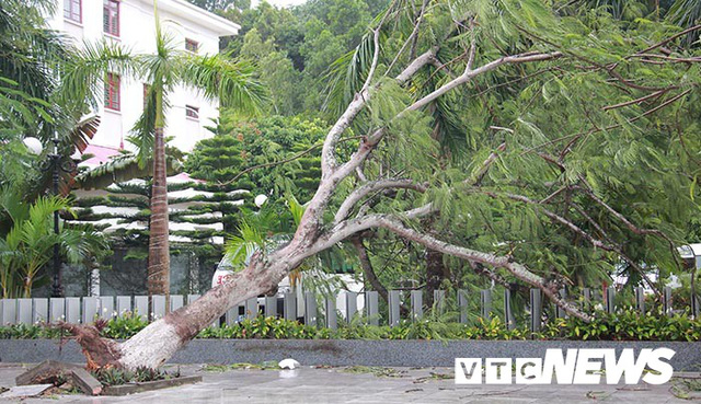 Ảnh: Bão số 2 quần thảo Đồ Sơn, quật đổ hàng loạt cây xanh ở Hải Phòng - Ảnh 4.