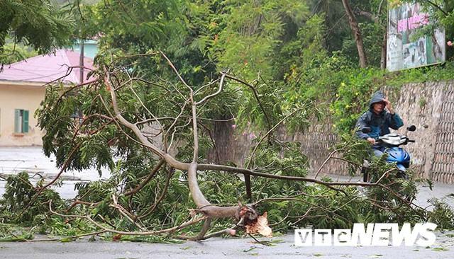 Ảnh: Bão số 2 quần thảo Đồ Sơn, quật đổ hàng loạt cây xanh ở Hải Phòng - Ảnh 5.