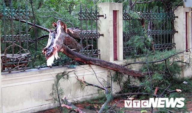 Ảnh: Bão số 2 quần thảo Đồ Sơn, quật đổ hàng loạt cây xanh ở Hải Phòng - Ảnh 6.