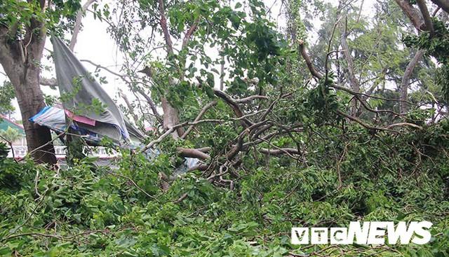 Ảnh: Bão số 2 quần thảo Đồ Sơn, quật đổ hàng loạt cây xanh ở Hải Phòng - Ảnh 7.