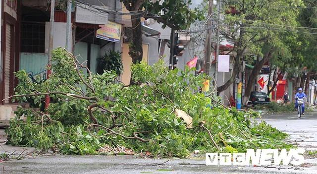 Ảnh: Bão số 2 quần thảo Đồ Sơn, quật đổ hàng loạt cây xanh ở Hải Phòng - Ảnh 8.