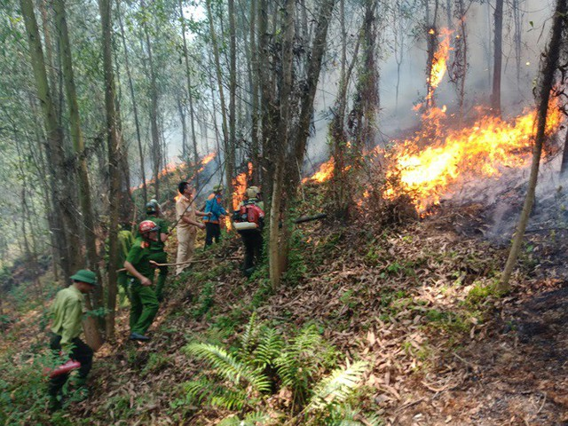Đang cháy lớn tại núi Nầm Hà Tĩnh - Ảnh 1.