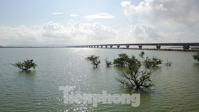 Cây cầu vượt biển dài nhất Việt Nam bị kiểm toán chỉ ra nhiều sai sót - Ảnh 1.