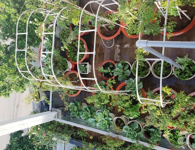 Sở hữu sân thượng rộng đến 200m², mẹ đảm ở Sài Gòn khiến nhiều người bất ngờ với trang trại rau quả tự trồng - Ảnh 2.