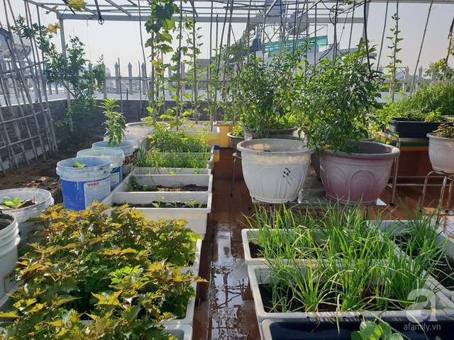 Sở hữu sân thượng rộng đến 200m², mẹ đảm ở Sài Gòn khiến nhiều người bất ngờ với trang trại rau quả tự trồng - Ảnh 15.