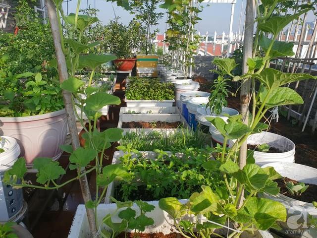 Sở hữu sân thượng rộng đến 200m², mẹ đảm ở Sài Gòn khiến nhiều người bất ngờ với trang trại rau quả tự trồng - Ảnh 17.