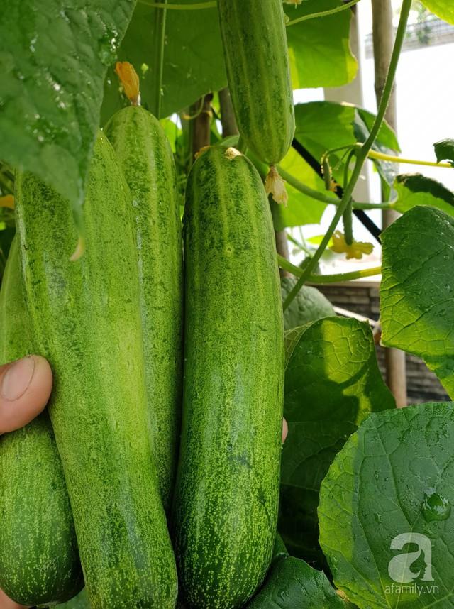 Sở hữu sân thượng rộng đến 200m², mẹ đảm ở Sài Gòn khiến nhiều người bất ngờ với trang trại rau quả tự trồng - Ảnh 21.