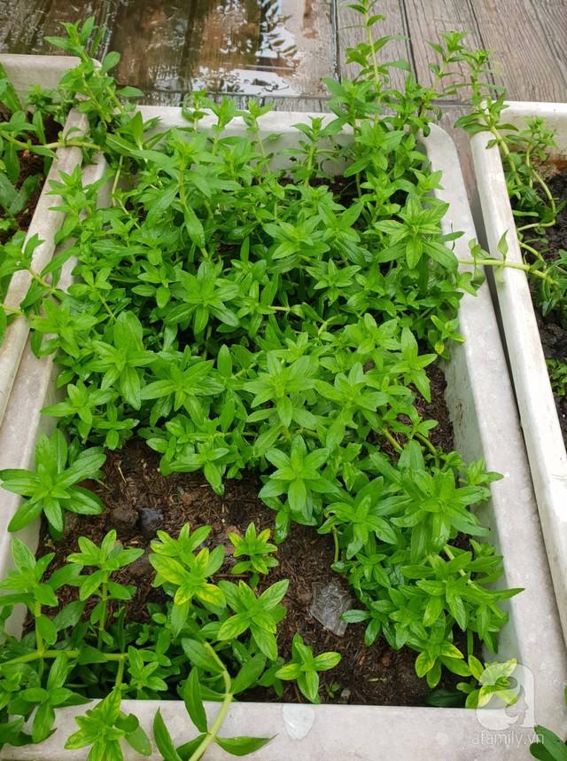 Sở hữu sân thượng rộng đến 200m², mẹ đảm ở Sài Gòn khiến nhiều người bất ngờ với trang trại rau quả tự trồng - Ảnh 23.