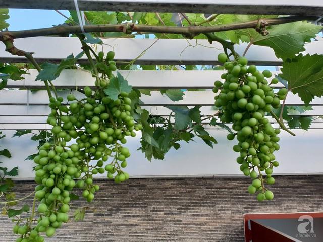 Sở hữu sân thượng rộng đến 200m², mẹ đảm ở Sài Gòn khiến nhiều người bất ngờ với trang trại rau quả tự trồng - Ảnh 24.