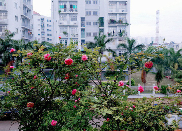 Sở hữu sân thượng rộng đến 200m², mẹ đảm ở Sài Gòn khiến nhiều người bất ngờ với trang trại rau quả tự trồng - Ảnh 29.