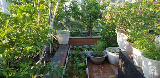 Sở hữu sân thượng rộng đến 200m², mẹ đảm ở Sài Gòn khiến nhiều người bất ngờ với trang trại rau quả tự trồng - Ảnh 4.