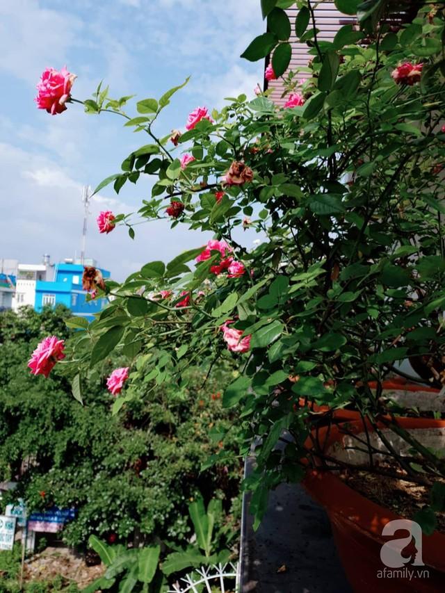 Sở hữu sân thượng rộng đến 200m², mẹ đảm ở Sài Gòn khiến nhiều người bất ngờ với trang trại rau quả tự trồng - Ảnh 32.