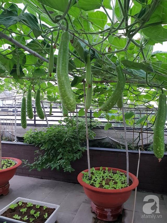 Sở hữu sân thượng rộng đến 200m², mẹ đảm ở Sài Gòn khiến nhiều người bất ngờ với trang trại rau quả tự trồng - Ảnh 6.