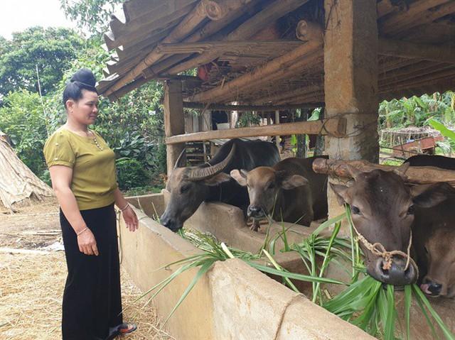 Nông dân trồng mía ở Sơn La và nỗi ám ảnh đường lậu - Ảnh 1.