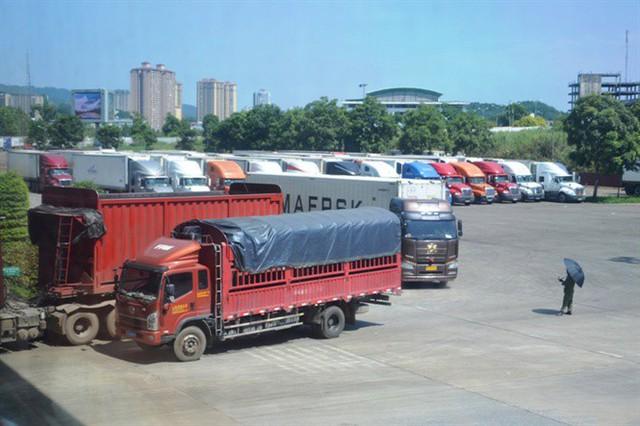 Gần 15 nghìn tấn thanh long được xuất sang Trung Quốc tuần qua - Ảnh 1.