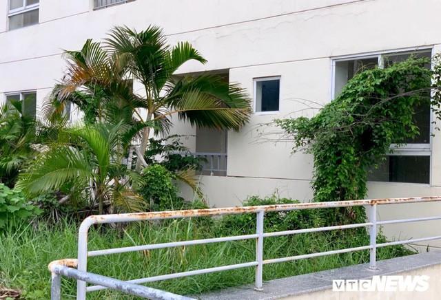 3.790 căn hộ giá gần 10.000 tỷ đồng bị bỏ hoang 4 năm tại TP.HCM - Ảnh 5.