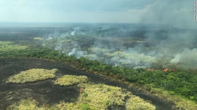 Thảm họa cháy rừng Amazon: Tất cả những gì bạn có thể nhìn thấy là cái chết - Ảnh 1.