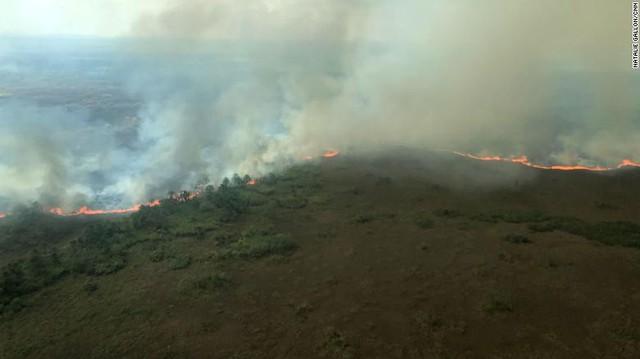Thảm họa cháy rừng Amazon: Tất cả những gì bạn có thể nhìn thấy là cái chết - Ảnh 2.