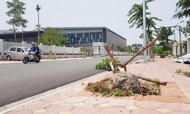Xôn xao loạt cây xanh bật gốc lộ nguyên vỏ bọc rễ sau mưa dông ở Linh Đàm - Ảnh 2.