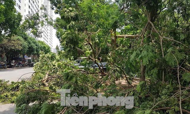 Xôn xao loạt cây xanh bật gốc lộ nguyên vỏ bọc rễ sau mưa dông ở Linh Đàm - Ảnh 12.