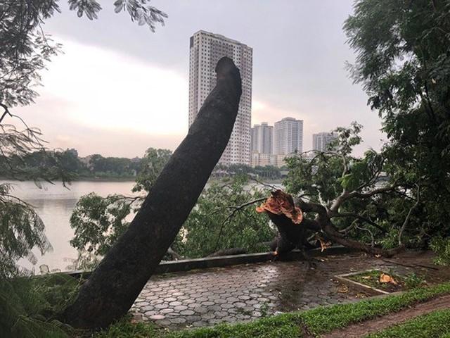 Xôn xao loạt cây xanh bật gốc lộ nguyên vỏ bọc rễ sau mưa dông ở Linh Đàm - Ảnh 13.